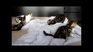 Много сладки и игриви котенца