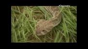 В Най-лошия Случай: Потъващ Автомобил / Среща С Гърмяща Змия С01 Е04 ( Бг Аудио )