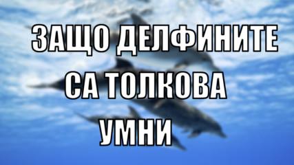 Защо делфините са толкова умни