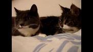 Две Котки Си Говорят - Смях