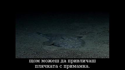 Морски Ангел -риба
