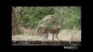 Извратена Маймуна