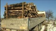 Едва една пета от актовете за нарушения в горите влизат в сила