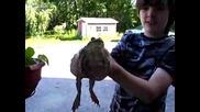 Мяукаща жаба!