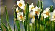 Bonjour Narcissus