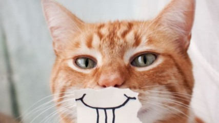 Топ 10 на най-смешните снимки на котки