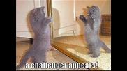 Най - Лудите Котки На Света - Смях