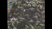 Насаме с пчелите(bg Audio) 16 част