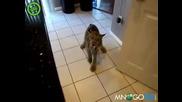 Мацц пиисс пис добро коте