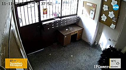 """""""Дръжте крадеца"""": Кражба на цвета от жилищен блок"""
