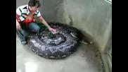 Gigantski anakonda