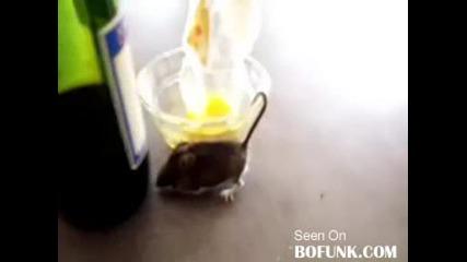 Мишок Попада В Капан - Купа С Мед!