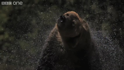 [ H D ] Slo Motion of Bear Shaking Water