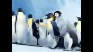 Tinku Pinguino Bailando en el Nevado Huayna Potos