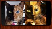 5 Странни Котки с мутации - Сладко или Зловещо?