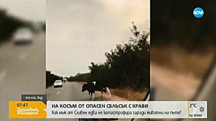 Как мъж едва не катастрофира заради животни на пътя?