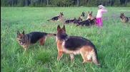 Малко момиче си играе с 14 Немски Овчарки - Guard Dogs