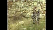 Vesna Zmijanac - Samo ja nikoga - (official Video 1994)