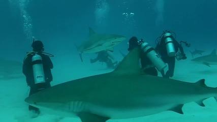 Oчи в Очи с Тигрова Акула !!!