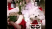 Котенца И Кученца Пеят Коледна Песничка