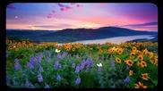 •• Цветя до хоризонта! ... ...••