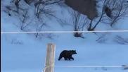 Баба Зина прогонва мечка
