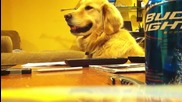 куче усеща ритъма и се усмихва
