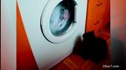 Котка изпада в шок от автоматична пералня