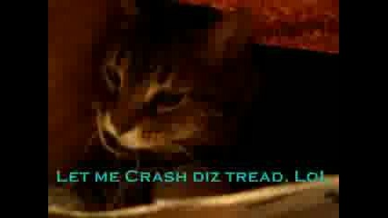 A Cat In The Bag..flv