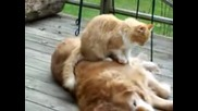 Приятелство между куче и котка