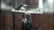 Папагал храни куче със спагети!