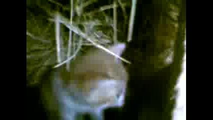 Най - сладките котенца