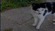 Да помогнем на бездомните и безпомощни котенца !