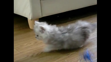 Страшно сладко котенце