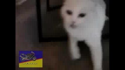 Ядосан Котарак