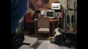 Супер яка компилация с котки - смях до напикаване