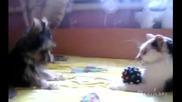 Кученцето си иска играчката обратно