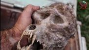 Селянин намери в Македония череп на български върколак запечатан в сандък