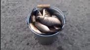 Колко риба сме наловили Смях