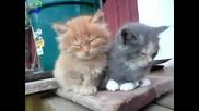 Най - опасните котета на света !!!