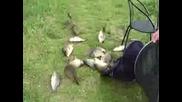 улова на деня*луди рибчици
