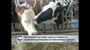 Изплащането на втория транш от схемите за национални доплащания на глава животно започна