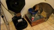 Електронна хранилка за котки