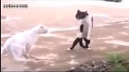 Котешки танц в Стил Michael Jackson Вижте