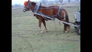 Nai - silniq kon v selo Dabene