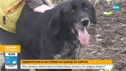 История, достойна за голям екран - изгубено куче се върна при стопаните си след месец