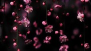 Erich Von Kollar - Pink Flower (c.r.e.c.c.a's Hypnotic Flower Remix)