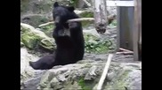 Истинската Кунг Фу панда