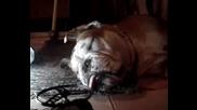 Сладко Куче Спи И Хърка (hug)