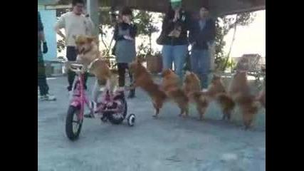 смешнu кучета :)